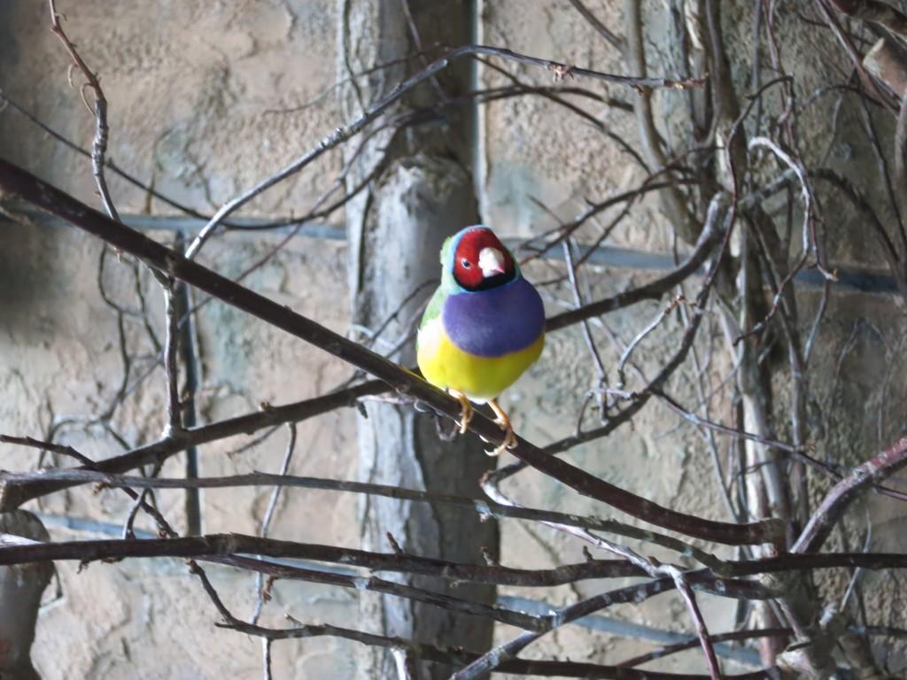 Fargerike fugler var å finne overalt