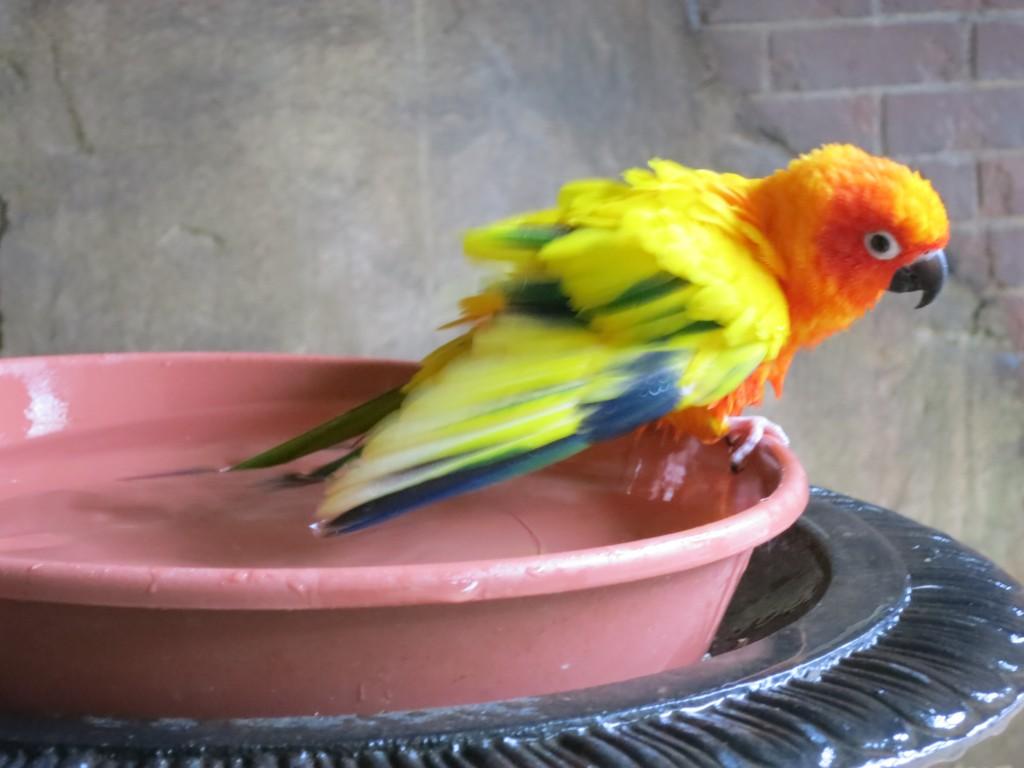 Denne vil ikke sitte stille. Jeg avbrøt tydeligvis morgenvasken!