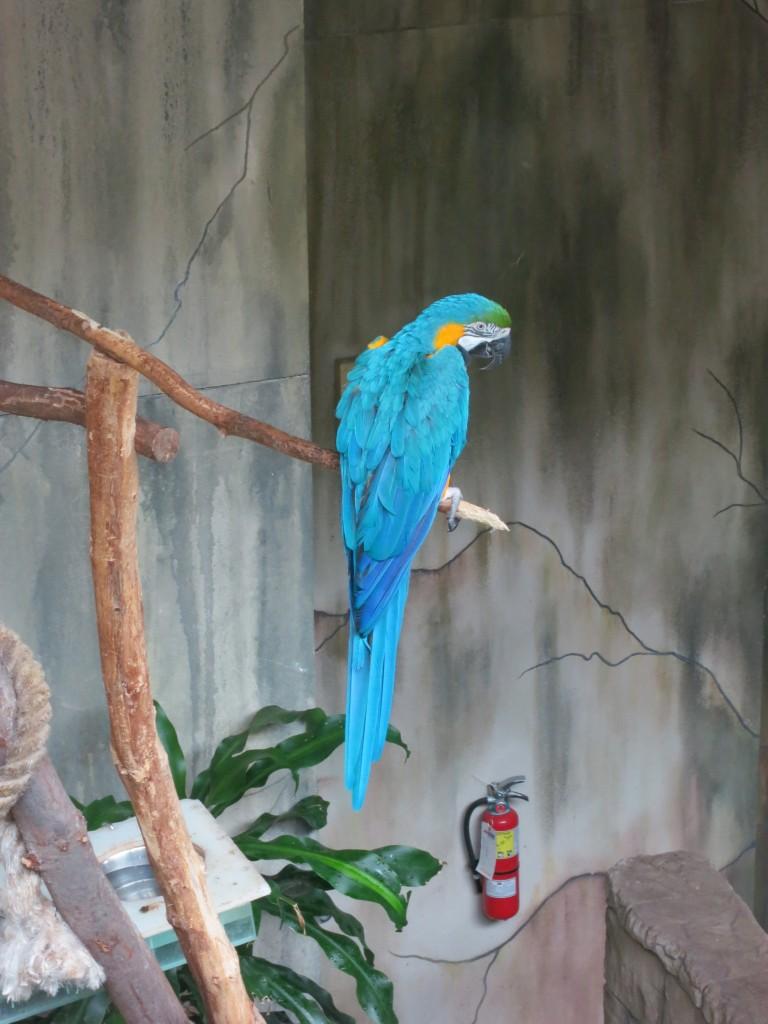 Papegøyer var å finne overalt